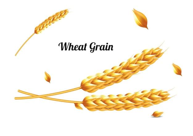 Grãos de trigo realistas ou sementes isoladas