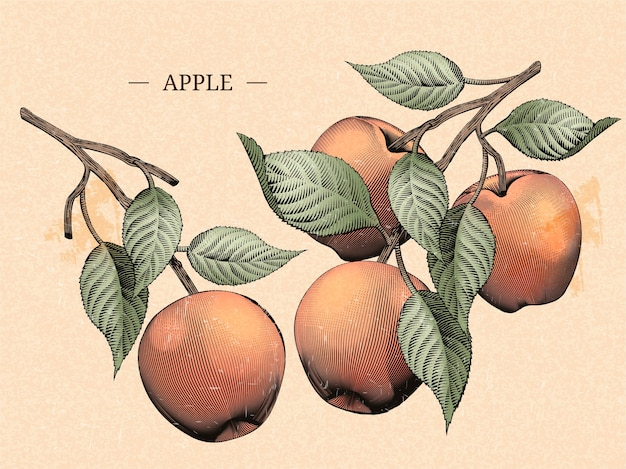 Gravando maçãs com folhas, elementos naturais de frutas