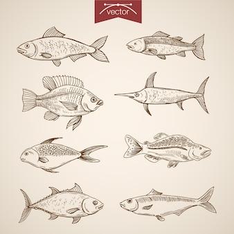 Gravura a coleção de peixes vintage mão desenhada.