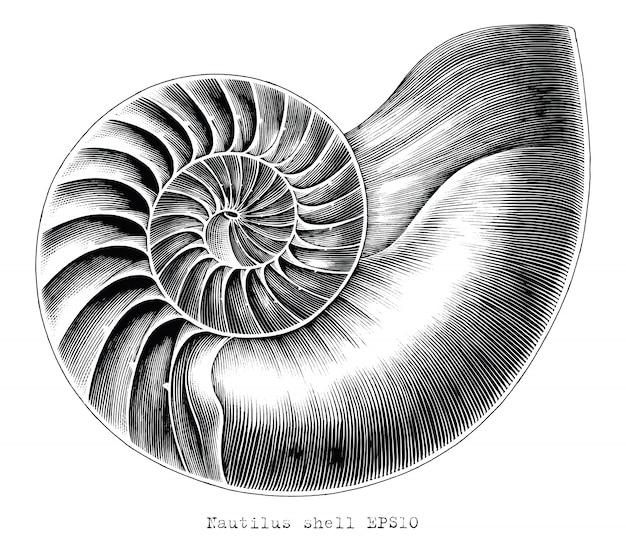 Gravura antiga ilustração da mão de concha de nautilus desenhar clip-art preto e branco isolado