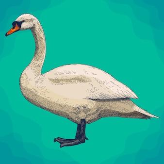 Gravura de ilustração de cisne em estilo retro