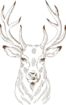 Gravura, desenho de veado