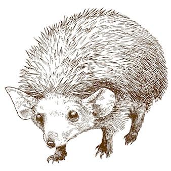 Gravura desenho ilustração de ouriço-orelhudo