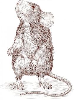 Gravura, desenho, ilustração, de, rato, ano novo chinês