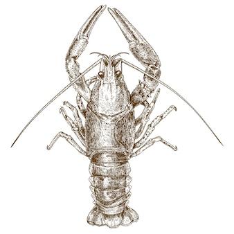 Gravura em xilogravura ilustração de lagostins