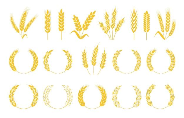 Grinaldas de trigo espigas de arroz, cevada, grãos de centeio, grãos e safras conjunto de plantas de cereais orgânicos