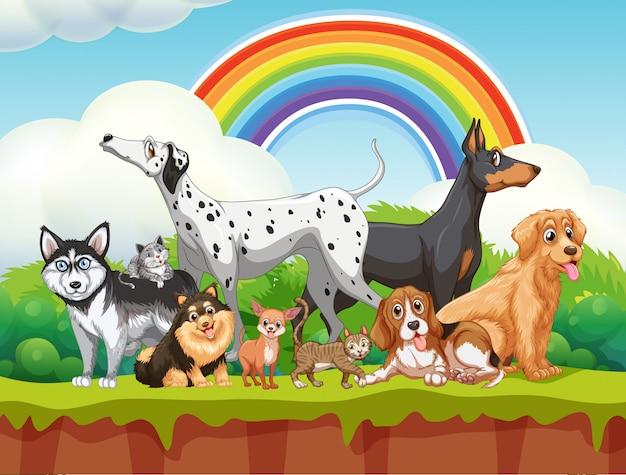 Grupo bonito cães diferentes na cena da natureza com arco-íris