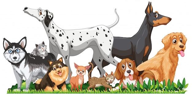 Grupo bonito cães diferentes