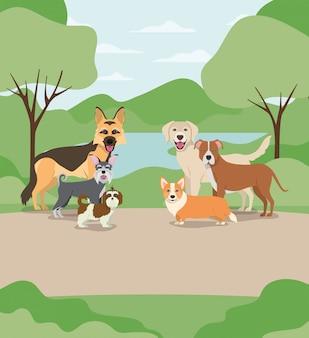 Grupo de animais de estimação cães nos personagens do acampamento