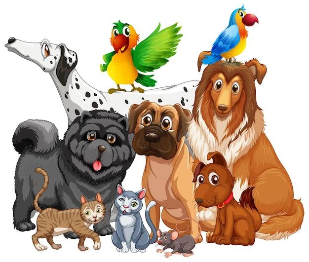 Grupo de animais de estimação em fundo branco