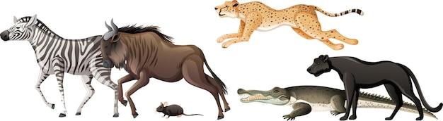 Grupo de animais selvagens africanos em fundo branco Vetor grátis