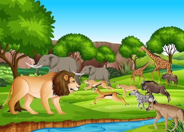Grupo de animais selvagens africanos na cena da floresta Vetor grátis