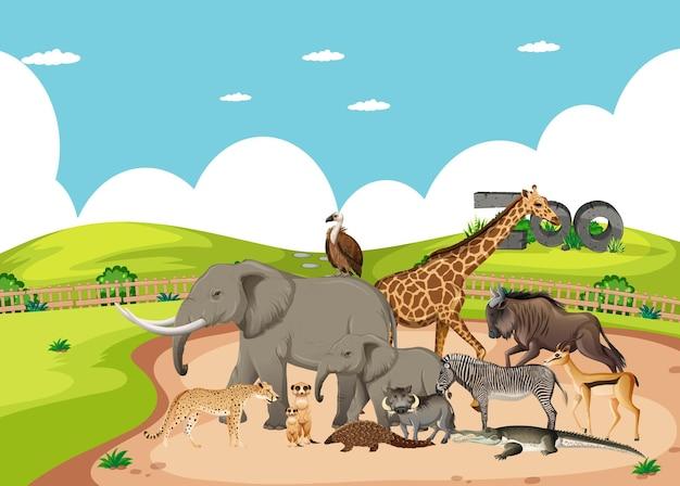 Grupo de animais selvagens africanos no cenário do zoológico