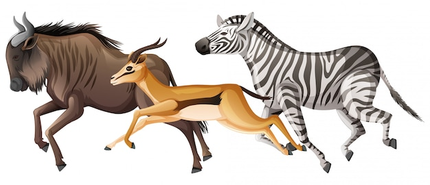 Grupo de animais selvagens correndo em branco