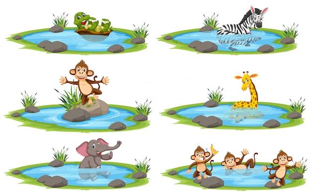 Grupo de animais selvagens em personagem de desenho animado de lagoa no fundo branco
