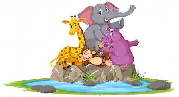Grupo de animais selvagens, posando no personagem de desenho animado de pedra no fundo branco