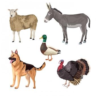 Grupo de caracteres de fazenda de animais