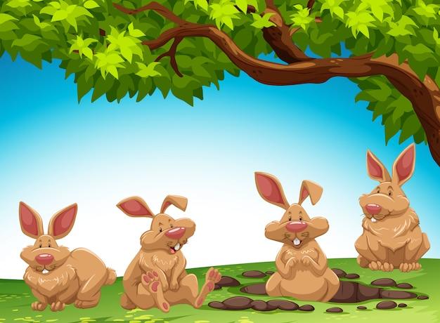 Grupo de coelho cavando chão