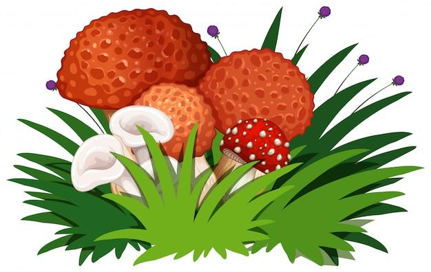 Grupo de cogumelo no fundo branco
