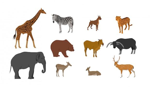 Grupo de coleção animal,