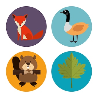 Grupo de cultura canadense de animais vector illustration design