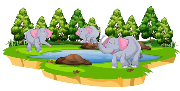 Grupo de elefante na natureza