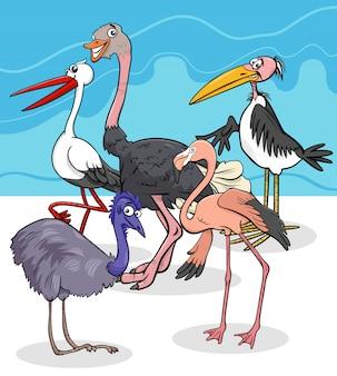 Grupo de espécies de aves selvagens ilustração dos desenhos animados