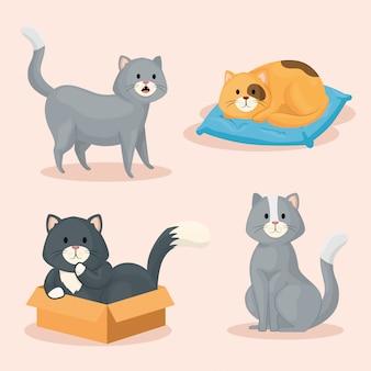 Grupo de gatos pequenos bonitos