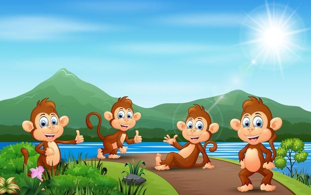 Grupo de macaco curtindo a natureza na estrada