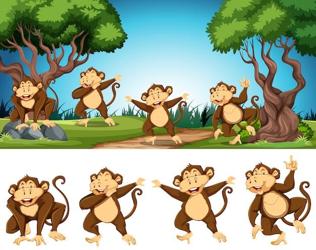 Grupo de macaco na natureza
