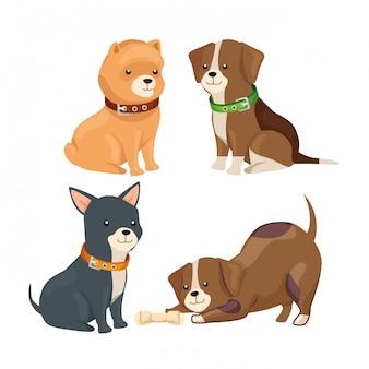 Grupo de pequenos cães animais isolados