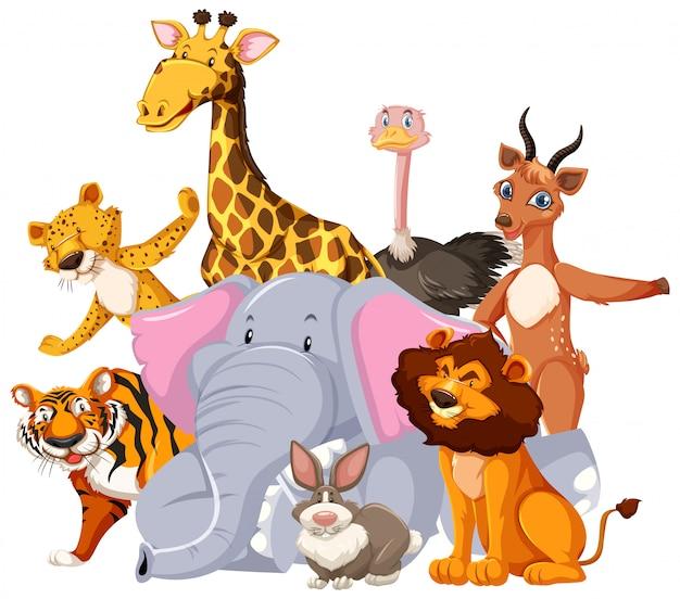 Grupo de personagem de desenho animado de animais selvagens