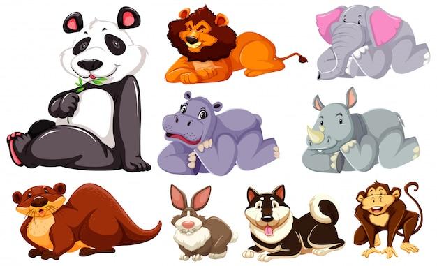 Grupo de personagem de desenho animado selvagem