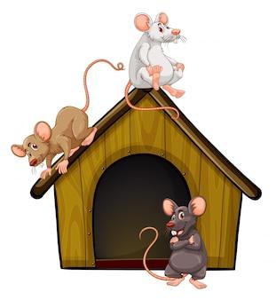 Grupo de ratos fofos com casinha isolada no fundo branco