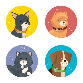 Grupo de rostos cães e gatos