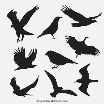 Grupo silhuetas do pássaro