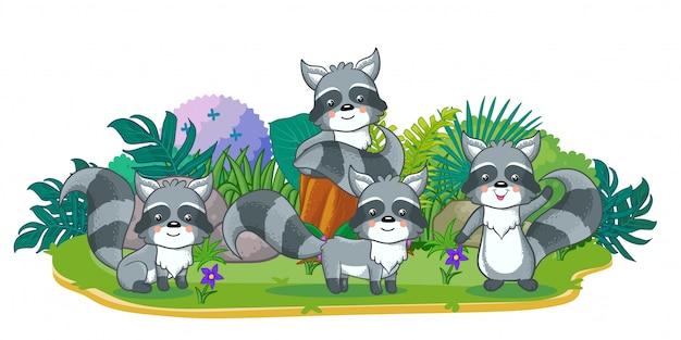 Guaxinins estão jogando juntos no jardim
