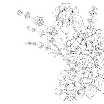 Guirlanda floral de lavanda e hortênsia isolada