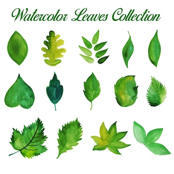 Hand drawn green watercolour leaves collection