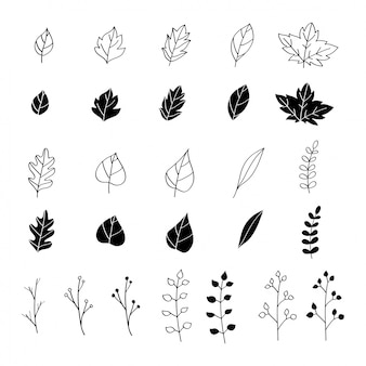 Hand drawn leaves design elements