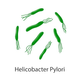 Helicobacter pylori doenças do estômago uma bactéria com flagelos