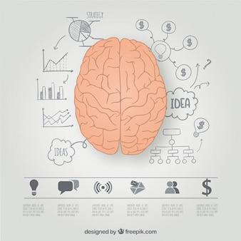 Hemisférios cerebrais gráfico