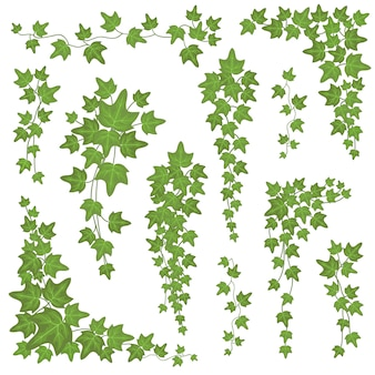Hera verde folhas em galhos de suspensão. escalada de parede decoração planta vector conjunto isolado