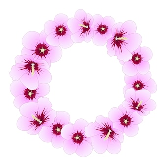 Hibisco syriacus - rosa da grinalda de sharon