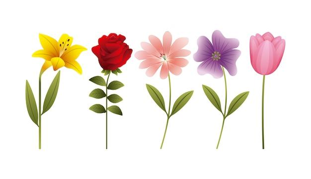 Hibiscus rosa margarida tulipa flores decoração banner