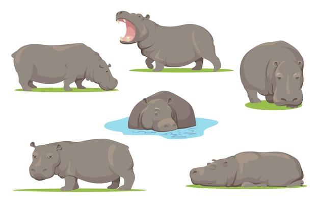 Hipopótamo em diferentes poses conjunto plano