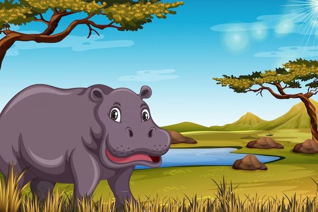 Hipopótamo na cena da savana