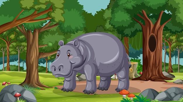 Hipopótamo na floresta em cena diurna com muitas árvores
