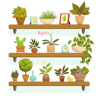 Home plantas e flores decorativas em vasos, de pé nas prateleiras