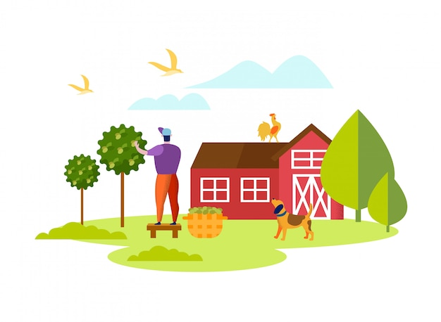 Homem, colher, maduro, azeitonas, cesta, jardim